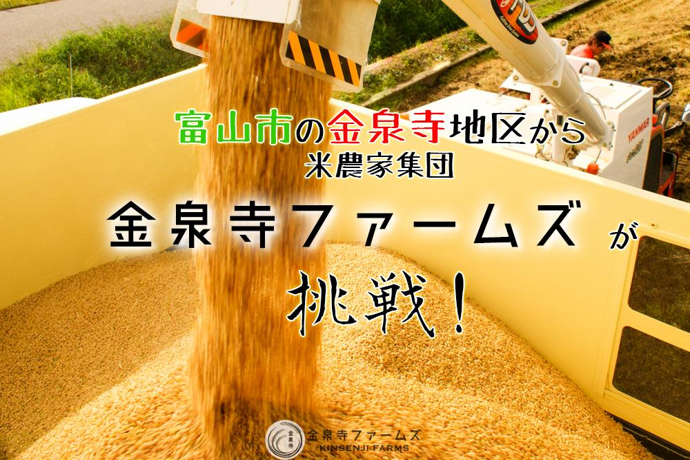 金泉寺ファームズ 富山 コシヒカリ 農家直販米 直販 米 12