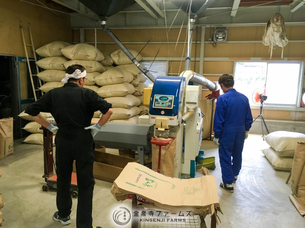 金泉寺ファームズ 袋詰 収穫 1