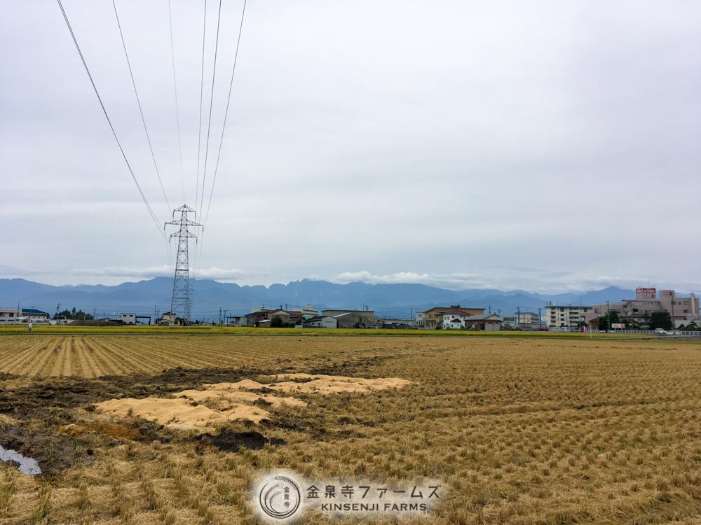 稲刈り 4日目 金泉寺ファームズ コシヒカリ 富山米 2